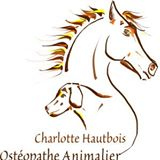Charlotte osteo equin