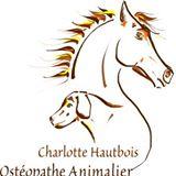 Charlotte osteo equin